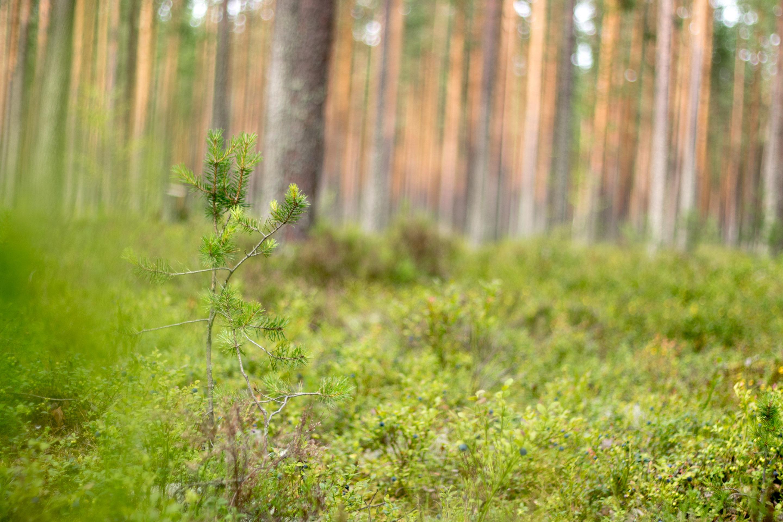 Binderholz Nordic